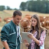 Adjusting Calf Feeding